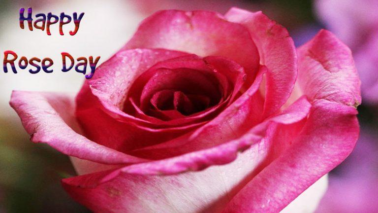 Happy Rose Day status