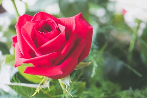 rose day messages for friends