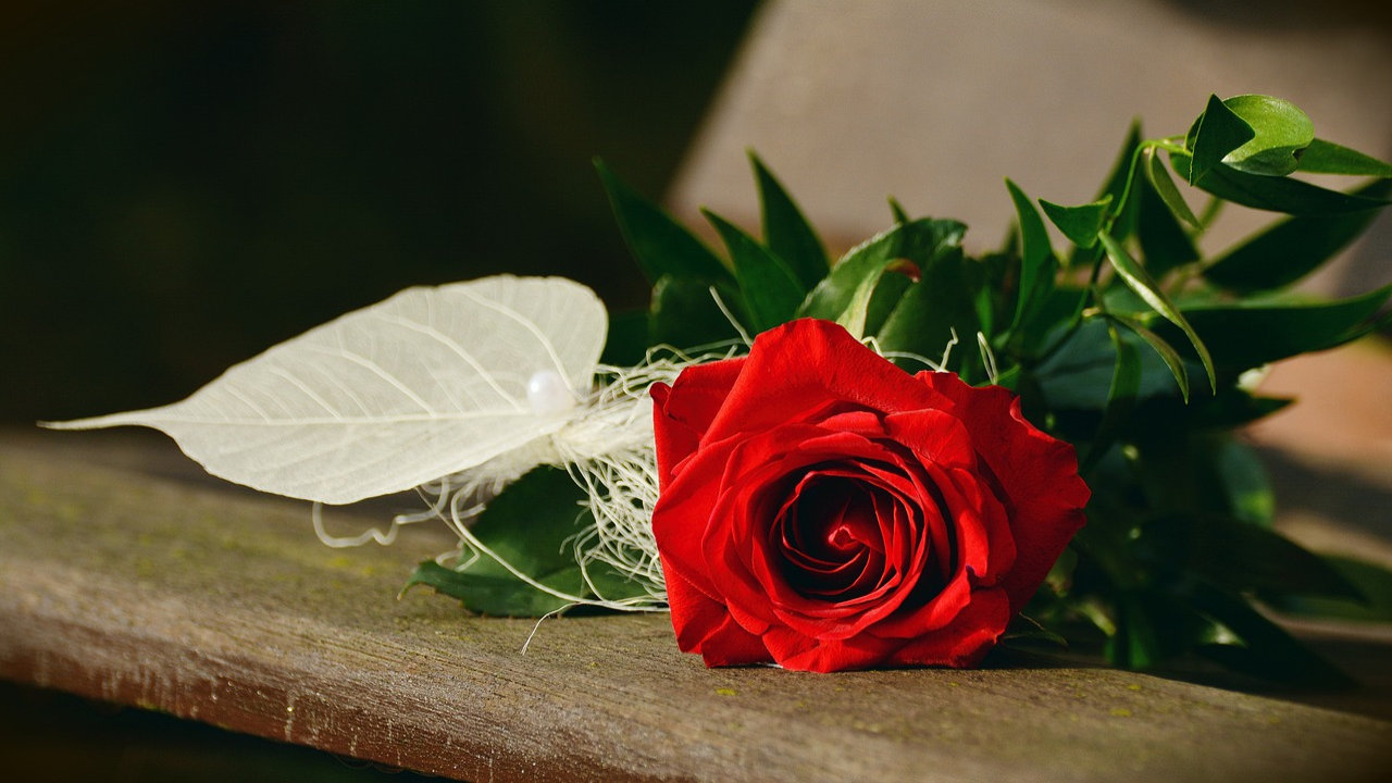 happy rose day date 2020